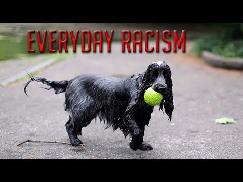 Everyday Racism: White People Smell Like Wet Dogs?